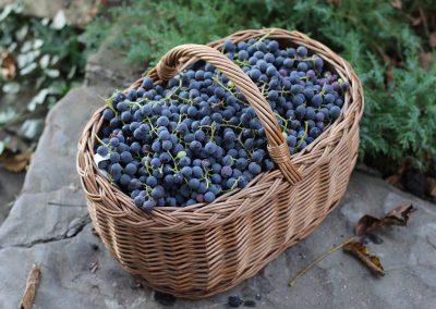 Осень — пора винограда