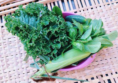 Летом мы выращиваем органически чистые овощи и зелень