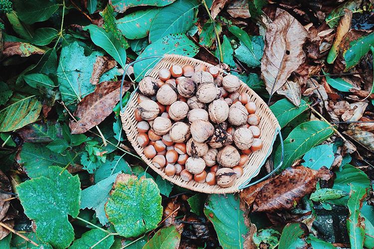 Ореховое угощение