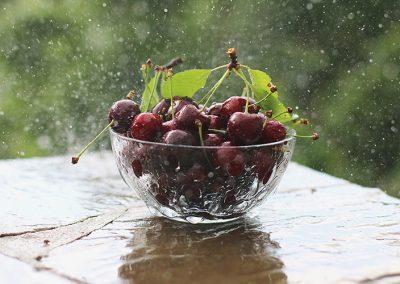 Будем рады угостить вас своими фруктами и ягодами
